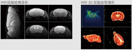 為小白鼠執行核磁共振成像 (磁振造影)