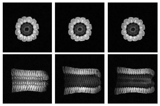 以NMI20核磁共振成像儀,看透玉米內部水分分佈